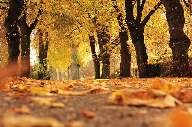 trees-1789120_640-1